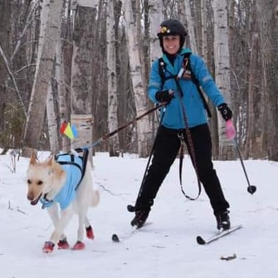 Cross Country Skiing with a White German Shepherd